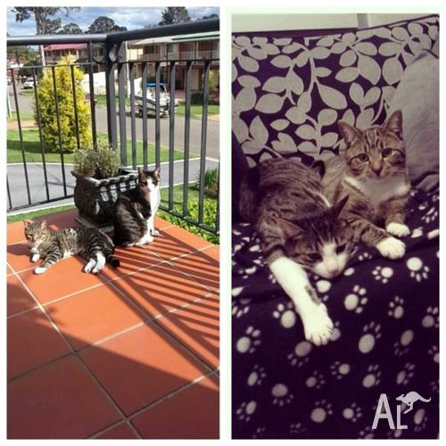 Two Beautiful Cats looking for new home
