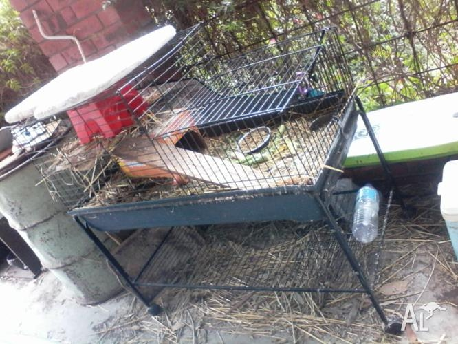 URGENT SALE RABBIT/GPIG CAGE. ON CASTORS. TXT PLS