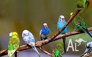 Variety of Birds from $4.00