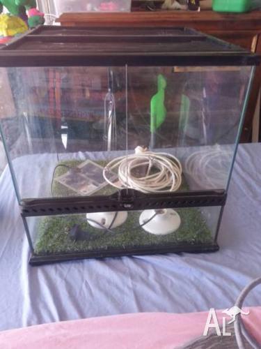vivarium with heat pad and 2 lights