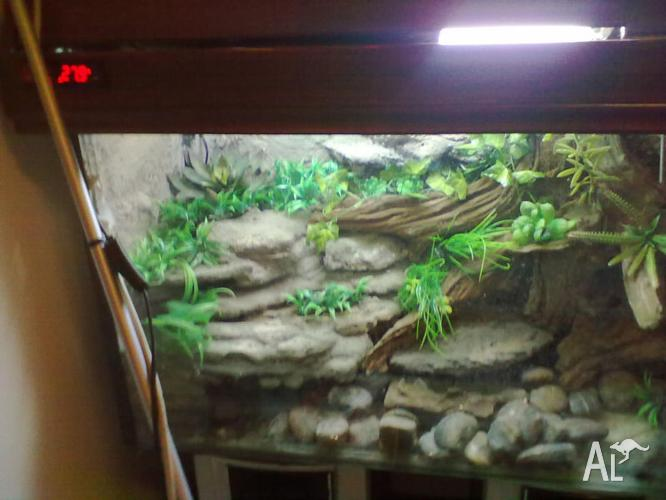 Water Dragon Turtle Enclosure Tank Terrarium Set Up Only For Sale In