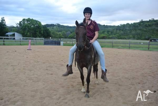 WELSH PONY REG PERFECT LEAD LINE OR SECOND PONY