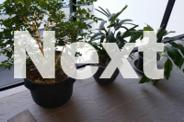 5 X ASSORTED PLANTS AND CERAMIC / PLASTIC POTS