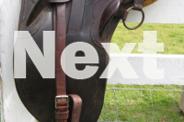 Australian Stock Saddles