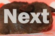 BABY LOPS, DWARFS AND DUTCH (from $20, lots to choose