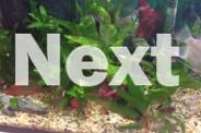 Bulk lot Java fern for fish tank