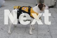 Ezy-Dog Dog Life jacket