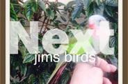 Hand Tame Princess Parrot