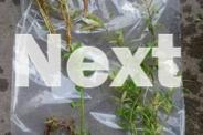 LIVE TROPICAL AQUARIUM PLANTS - MUST SELL