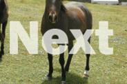 Ponies and Galloways for sale