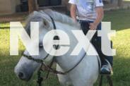 Shetland Pony riding gelding