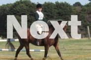 TALENTED ALL ROUNDER 15.3HH BAY GELDING 8YO
