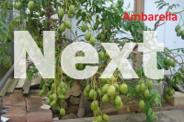 Unusual Exotic Tropical Fruit Trees and Plants