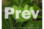 2013 Australian Green Tree Python Juveniles