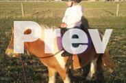 AMPS reg kids pony