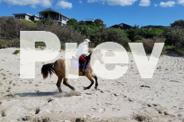 BUCKSKIN STOCKHORSE MARE EXPERIENCED RIDER OR PET ONLY!