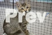Cats and Kittens for sale - Cat Haven Shelter