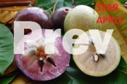 Exotic Tropical Fruit Trees and Plants