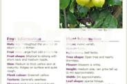 Fruit Trees (various)