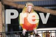 HAND RAISED PARROTS, GREEN CHEEK ,SUN CONURES, IRN AND