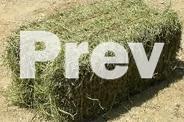 Hay Price Updates Lucerne, grassy, sorghum etc