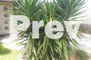 Heaps of Yucca, Aloe Vera & Agave - very hardy plants!