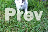 Kitten needs home