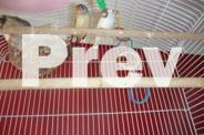 large bird cage with 9zebra finches and 1 gouldian