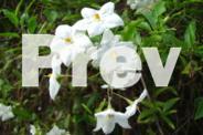 LOVELY GARDEN PLANTS FOR SALE