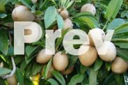 Lychee, Longan and other fruit trees and plants