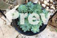 Metal plant stand with black porcelain pots and