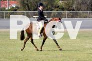 Quiet Show Pony