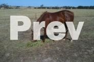 Rider/Horse person wanted Ballarat
