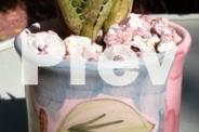 Succulent in Reloved Container
