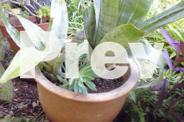 Succulents and Pot plants