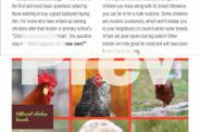 The Beginner's Guide to Backyard Chickens - 2015 FREE