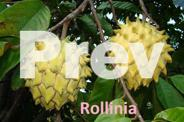 Tropical Fruit Trees and Plants