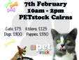 North Qld Animal Rescue will be at PETStock Cairns,