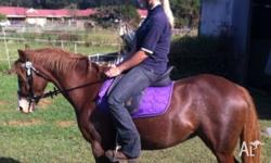 Emmy is a 4 year old 12.2hh registered chestnut riding