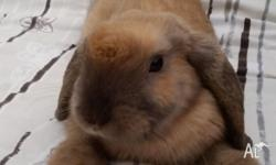 I'm giving away my 12 weeks male bunny to a loving