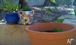 1 Large Terracotta Pot & 2 x Small flower pots for