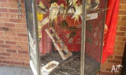 20 cockatiels and 3 MASSIVE cages for sale for $400.