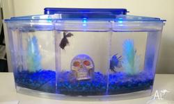 Red + Blue Fighting Fish Pump Tank with LED Blue +