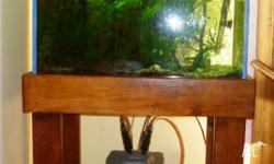 2 FT TANK FISH TANK STAND AND HOOD LIVE PLANTS NOT A