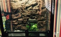 For sale 2 large green Tree frogs with aquarium and