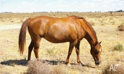 Cash Two Bob Cash Q-57574 2003 Chestnut Mare Dox Cash O