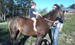 Reg Quarter Horse - Boobook Handy Buck. Green Broke. No