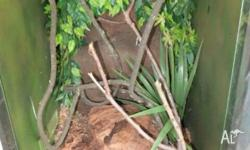 Great customized snake enclosure, look amazing and