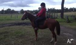Safe PC mount in the making - Stock Horse Gelding 2yo