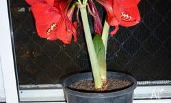(Photo is an example of the first plant that in this
